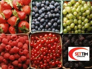sumski-plodovi-sobiren-centar